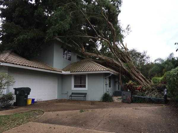 Photo tweeted by Cris Martinez: On the scene: #boca Uprooted tree on house #stormdamage #damagesurvey