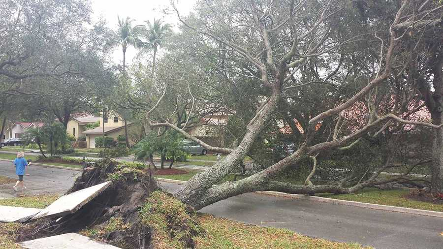 Meteorologist Cris Martinez teamed up with the National Weather Service of Miami to evaluate the storm damage left behind by a strong line of downpours Thursday. Photos also submitted by Steve Tishfield.