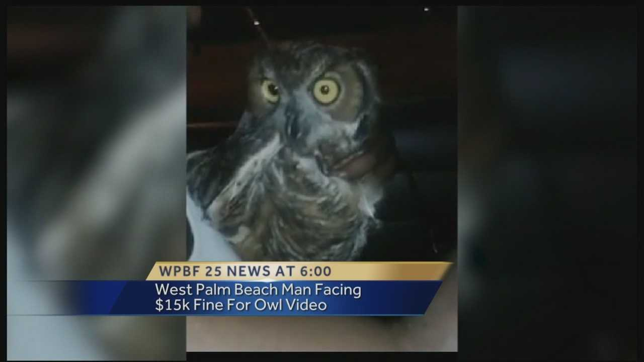 A West Palm Beach man seen driving with an owl in a video posted to Facebook is now facing federal charges. He is accused of violating the Federal Migratory Bird Treaty Act of 1918.