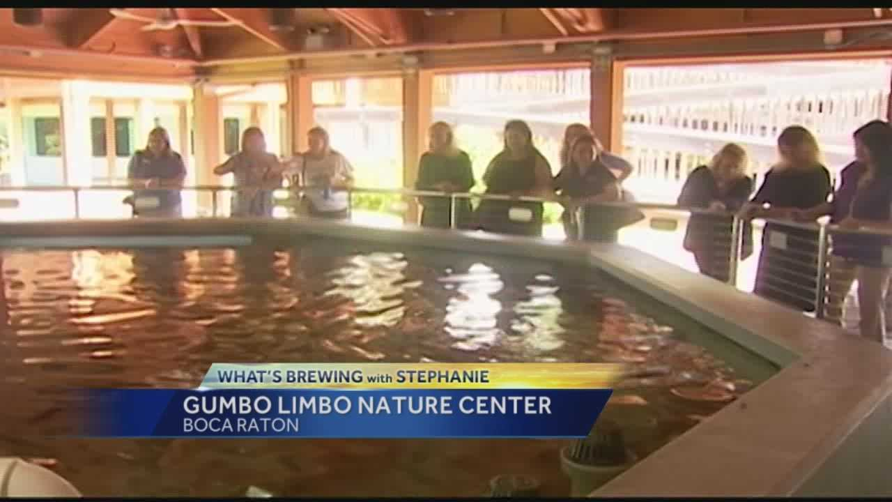 In this week's edition of What's Brewing with Stephanie she headed down to Boca Raton for a visit at to Gumbo Limbo Nature Center.