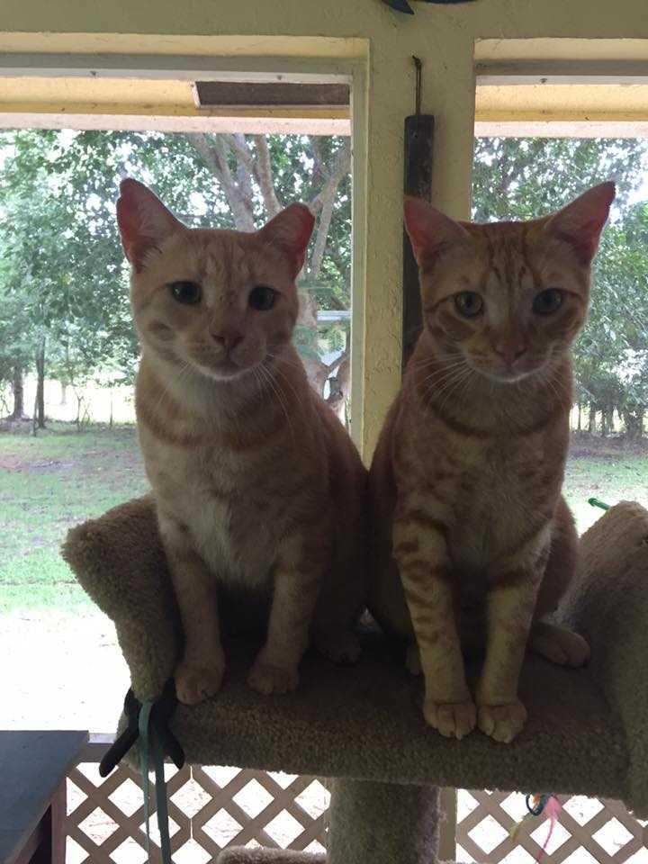 Frankie and Leon