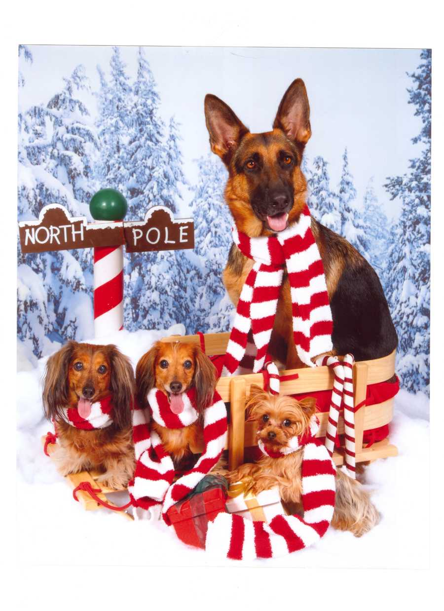 "Santa's little barkers? Nah, u local user sph calls them ""Santa's good little helpers."""