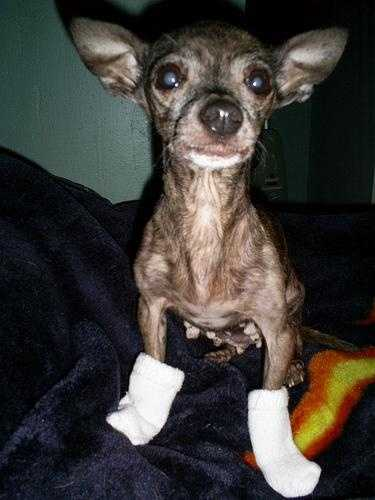 """Some people name their pets """"Socks."""" Others, like Flickr user Sew Ripped, just make them wear them."""
