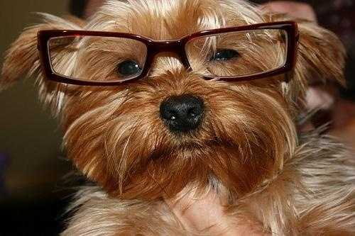 Flickr user BDegan got a few compliments after posting this picture of a very scholarly looking dog named Rocco.