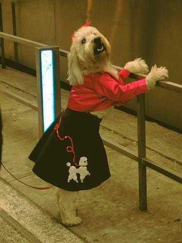 Flickr user mockstar shows off a picture of a poodle in a poodle skirt at the Dog Costume Contest in New York's Times Square a few years back.