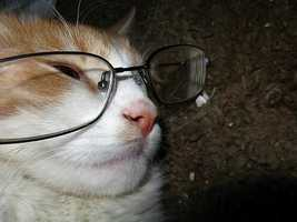 It's been said that cats have nine lives, but four eyes? Thanks, vibrantspirit.