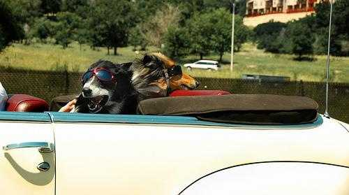 "Flickr user billaday says, ""I suppose that only in Colorado would you find dogs with glasses/goggles on while driving down the freeway. I've been told, however, that it's dangerous for dogs to have their eyes exposed at high speeds. Hmm."""