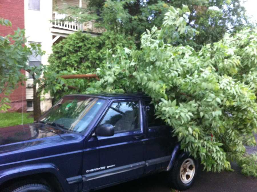 A second tree falls on a car on Brookes Ave in Burlington.