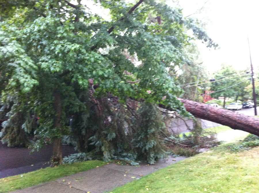 A tree knocked over on Brookes Ave in Burlington, Vt.