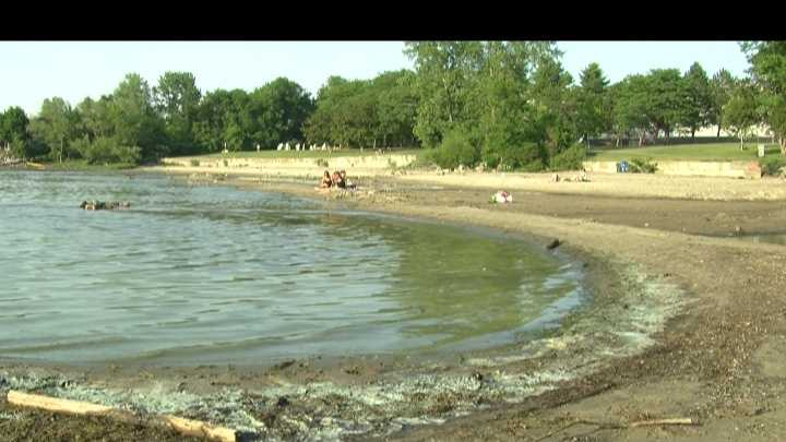 Various beaches like Blanchard at Oakledge Park and Leddy Park have films of blue-green algae rotting on the water.