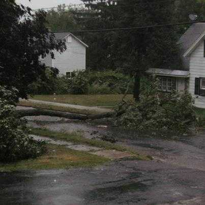 Tress cover driveway.