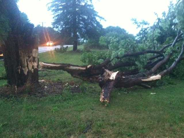 Tree down in Grand Isle