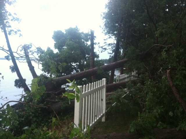 Tree vs. fencing in Grand Isle