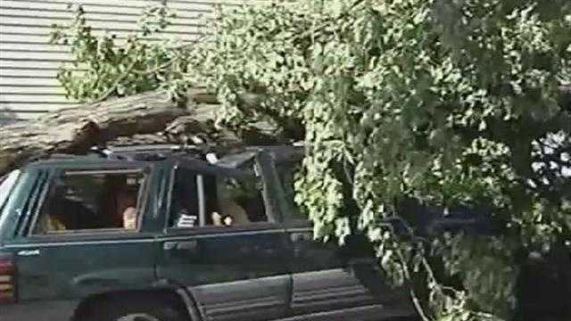 A tree felled during Saturday's storm in crushed a Jeep in Swanton.
