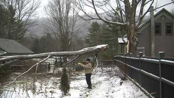 Thankfully, this tree fell in Carol Wieland's yard, not onto her house.