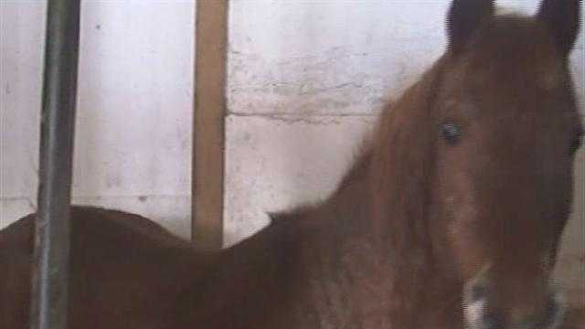 Vt Horses rescued