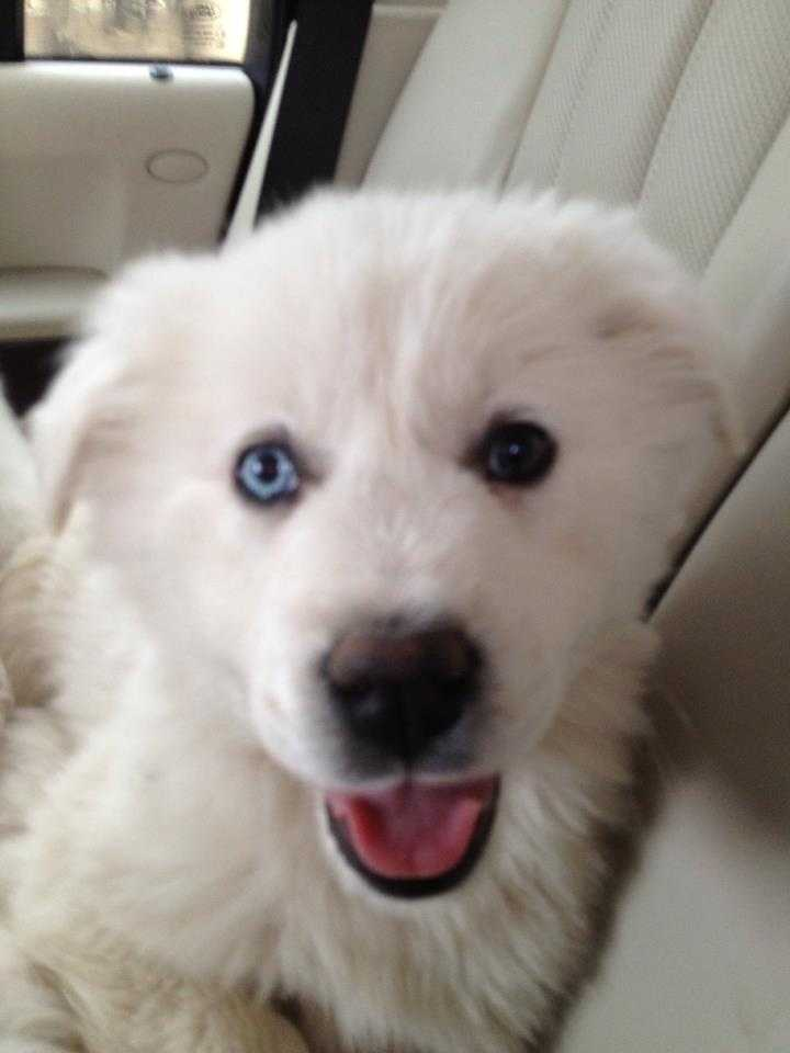 Blu is one of four puppies that were rescued from a shelter in Dallas.