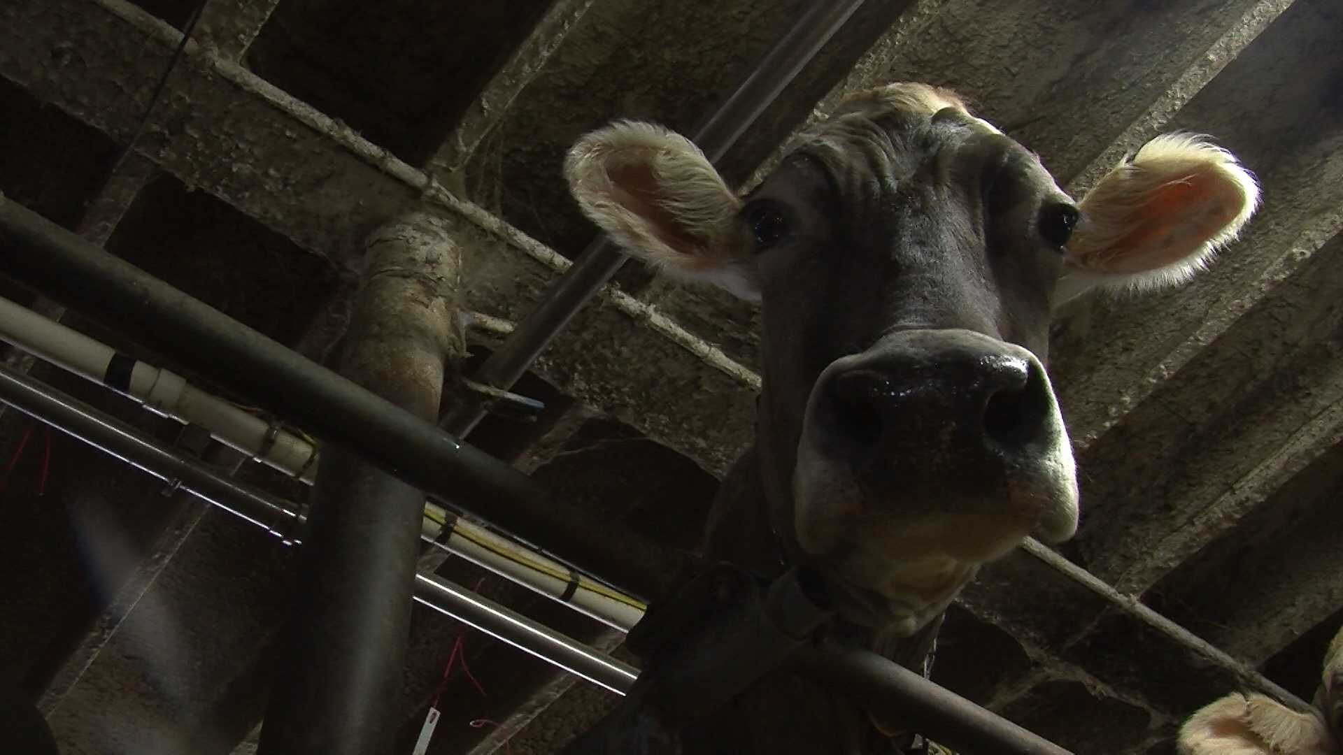 NY, Vt. reps to push for dairy farm worker visas