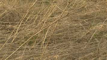 Dry brush allows fire to easily spread from buildings to grass and trees.