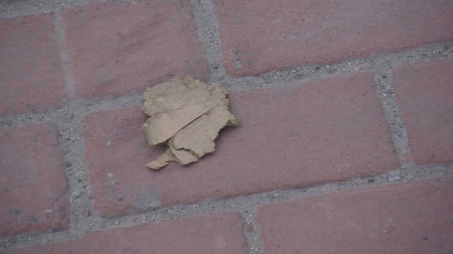 Piece of cardboard on Main Street.