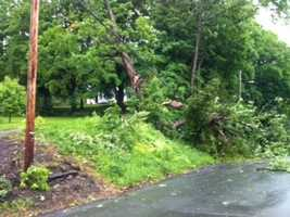 Trees down in St. Johnsbury.