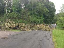 Trees and power lines down in St. Johnsbury.