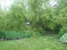 Car under tree on Union Street in St. Johnsbury.