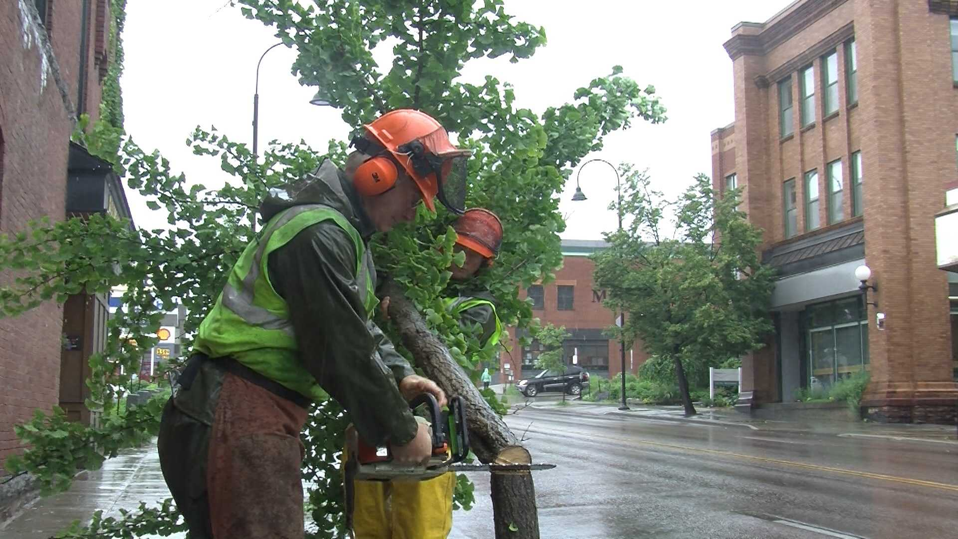 Vandals who recently hacked up four trees on South Winooski Avenue in Burlington could be costing taxpayers $6,000 to replace the greenery, but it's not just residents' wallets that are hurting.