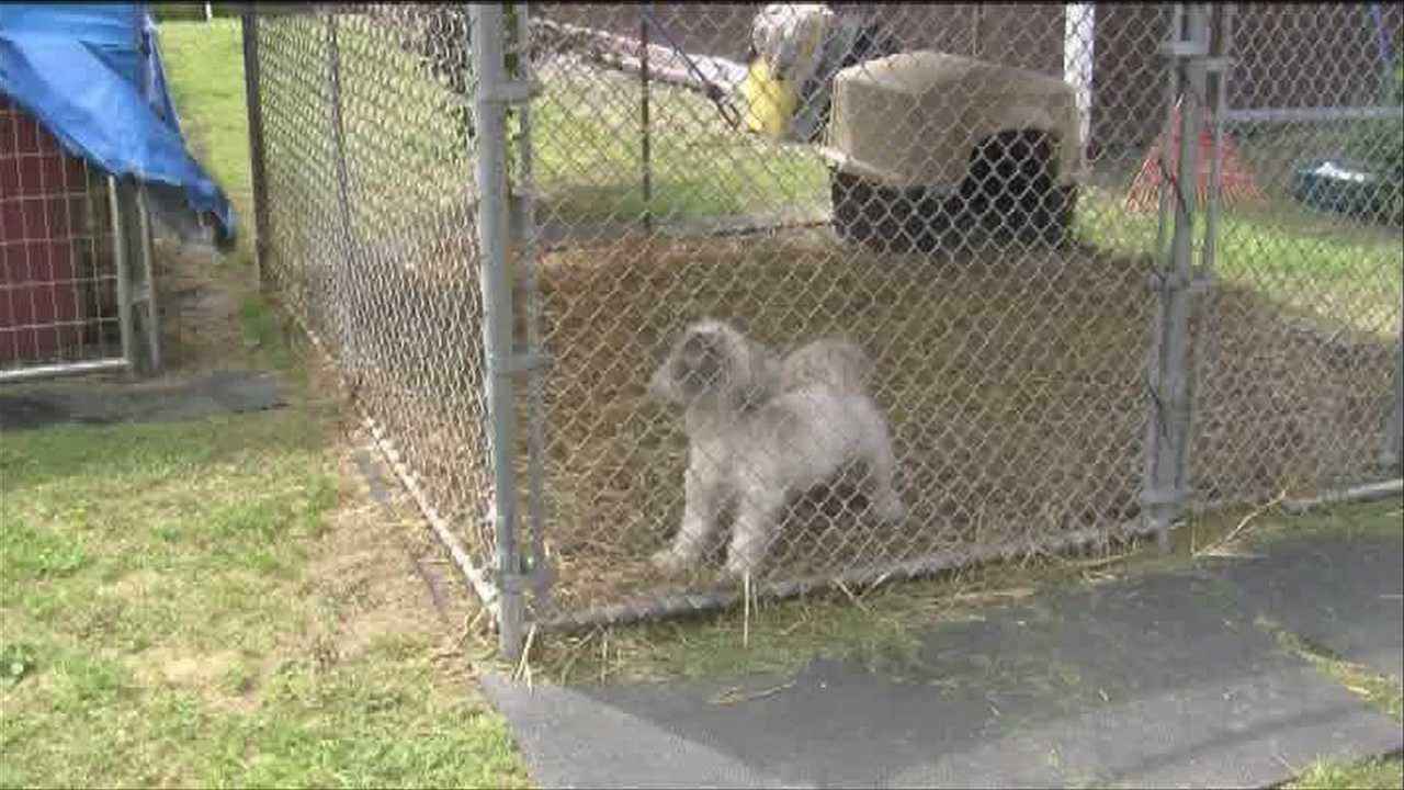 06-20-13 Door-to-door dog census in Malone - img