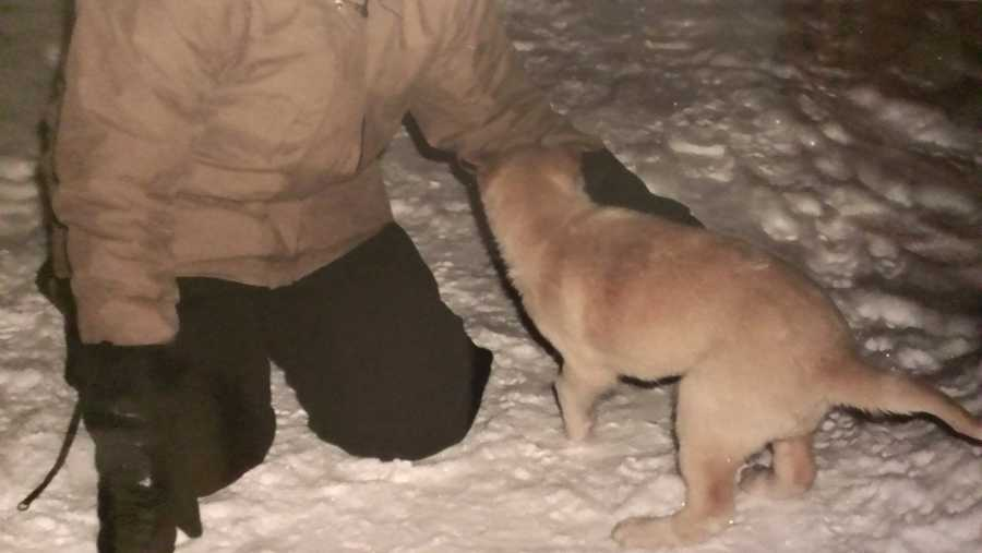 This little pup, not phased by the cold, just wanted to play.