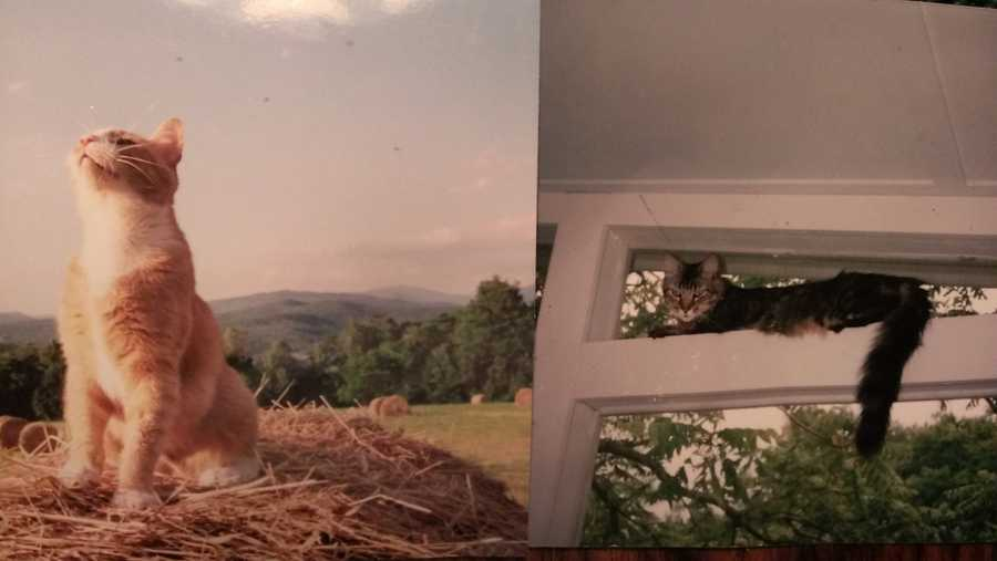 The cats loved Vermont. Tiger loved climbing.