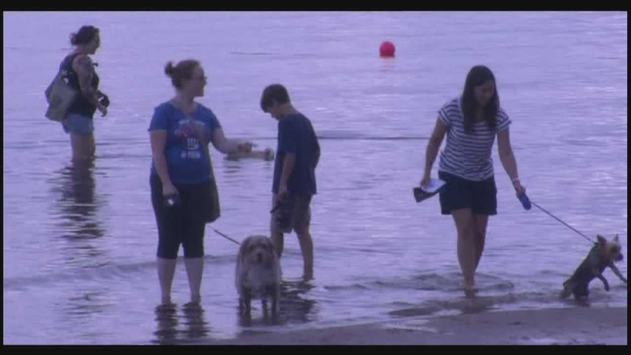 For one night only, dogs allowed on Plattsburgh City Beach