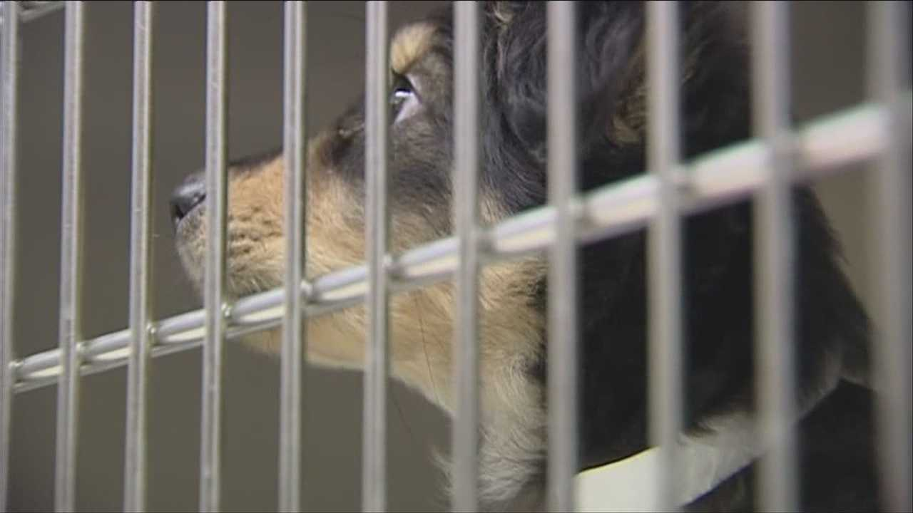 img-Northern Puppies owner speaks out