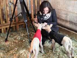 Any day that I'm doing a story with animals is a good day. Here I did a story at Billings Farm in Woodstock. It was my first time being around baby lambs. They were the cutest things in the world! And not a bit camera shy...
