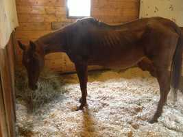 Dreamer, a severely emaciated horse, was surrendered by its Moira owners after they came under fire on Facebook.