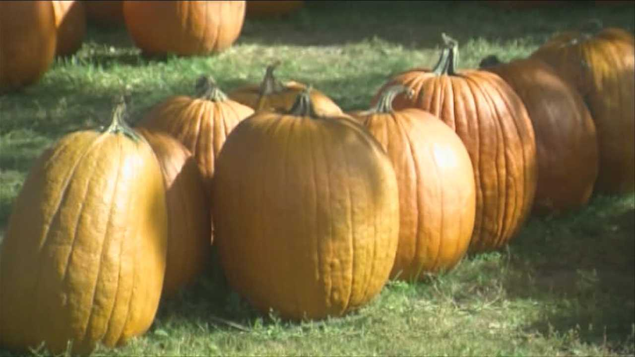 Local farm dishes on autumn harvest