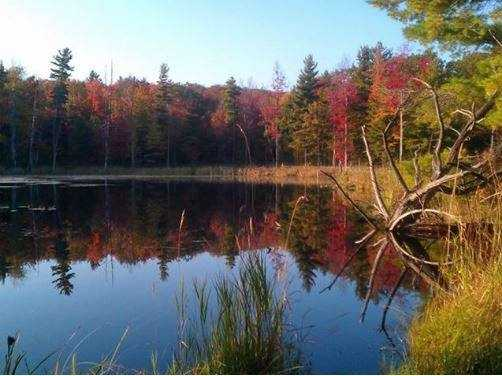 Beaver Pond in Fairfield, Vt. by Steven DesLauriers.