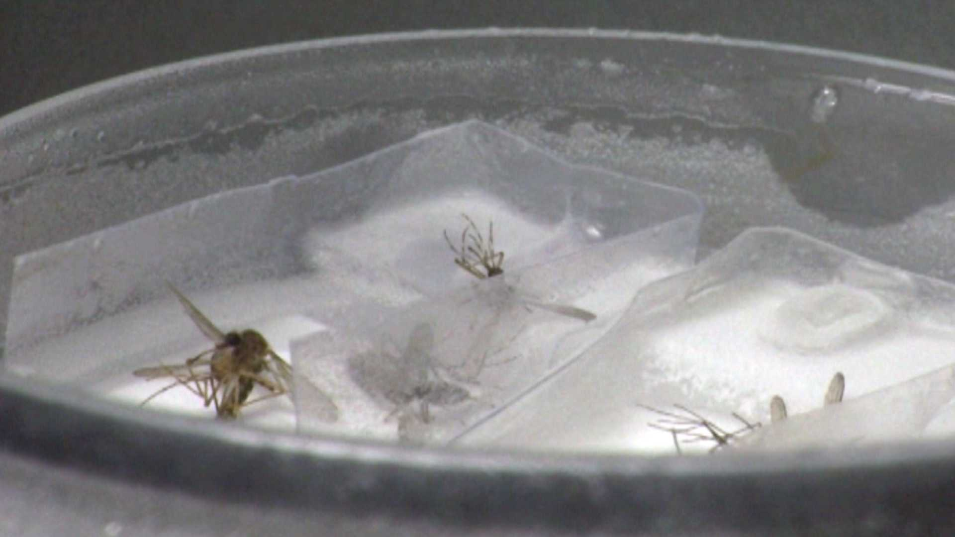Health officials warn the threat of contracting potentially deadly mosquito-borne illnesses is not over.