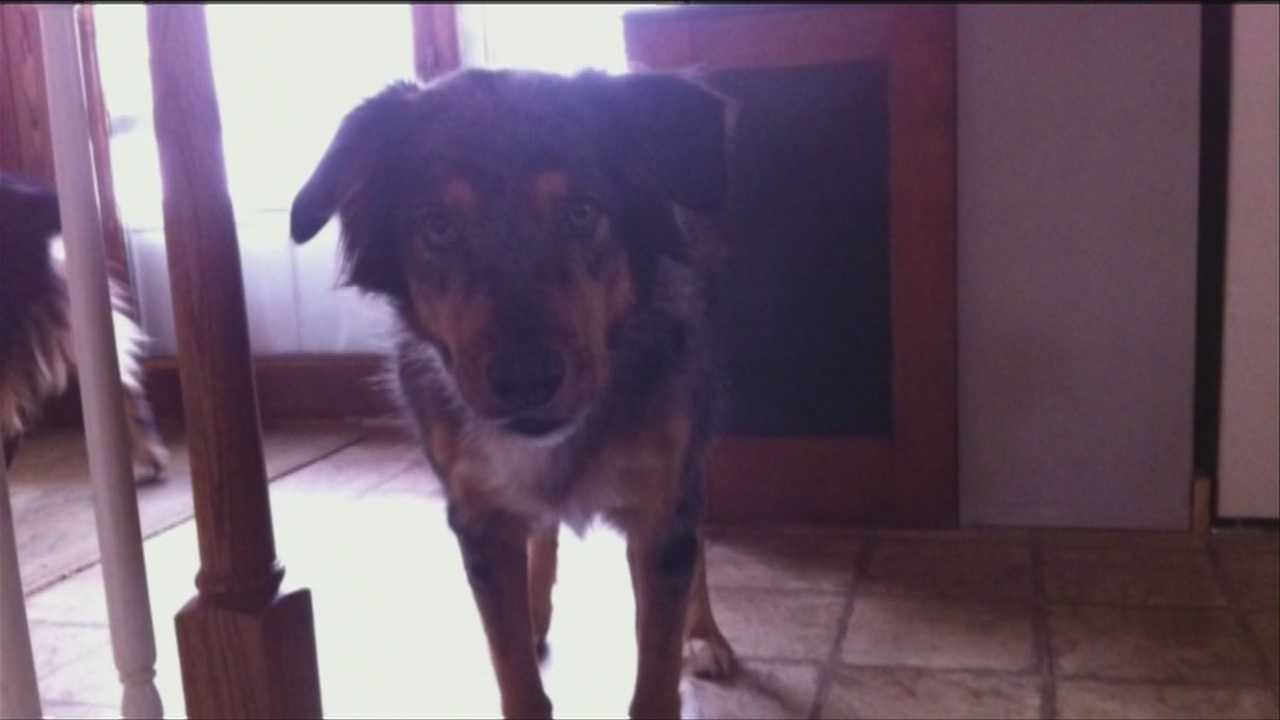 A Vermont dog is dead after ingesting antifreeze and the dog's owner says it was no accident.