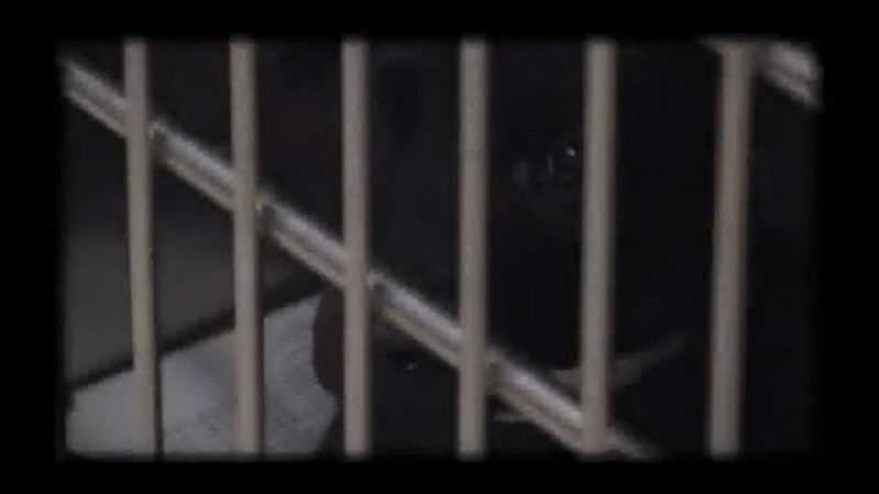11-19-13 Animal abuse laws not effectively enforced - Img