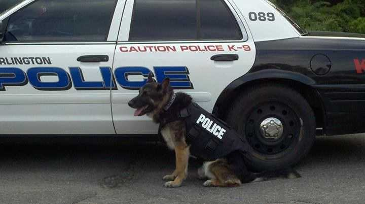 K9 Andre wears his vest.