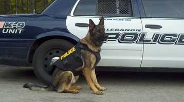 K9 Briggs wears his vest.