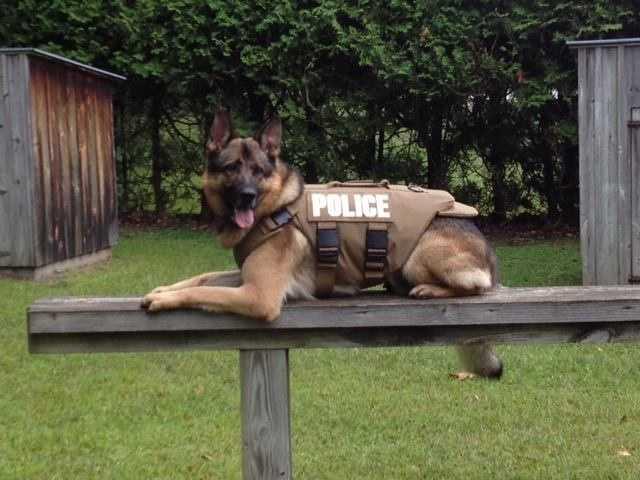 K9 Reiko wears his vest.