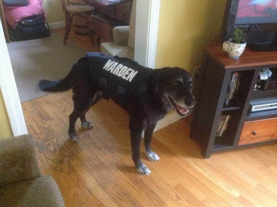 K9 Rufus wears his vest.