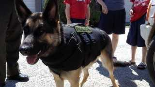 K9 Tarawa wears his vest.