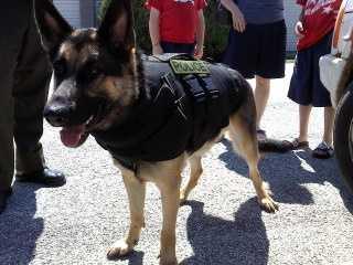 K9 Tarawa wears his vest.