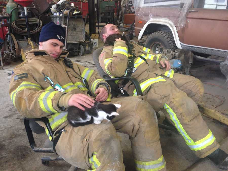 Winooski Fire Department members play with the kittens they rescued Friday morning from the rubble of an apartment fire.
