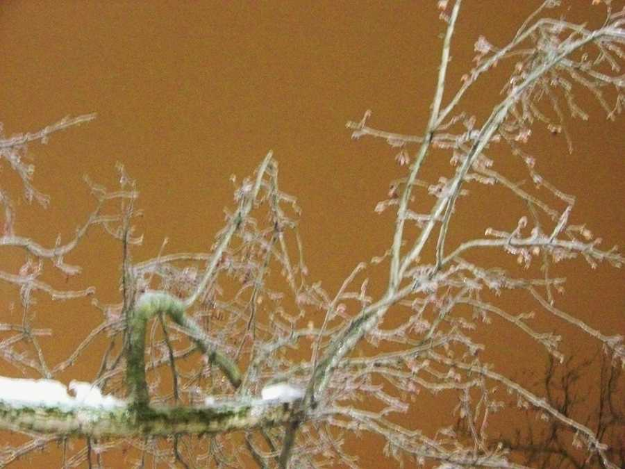 The ice is forming on trees all over St. Albans, Vermont.