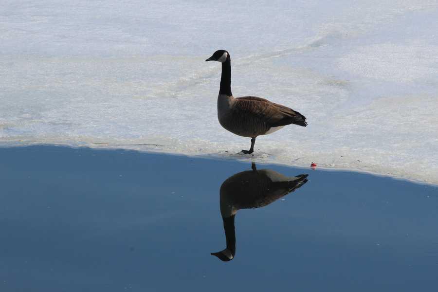Lake Bomoseen, Vt.
