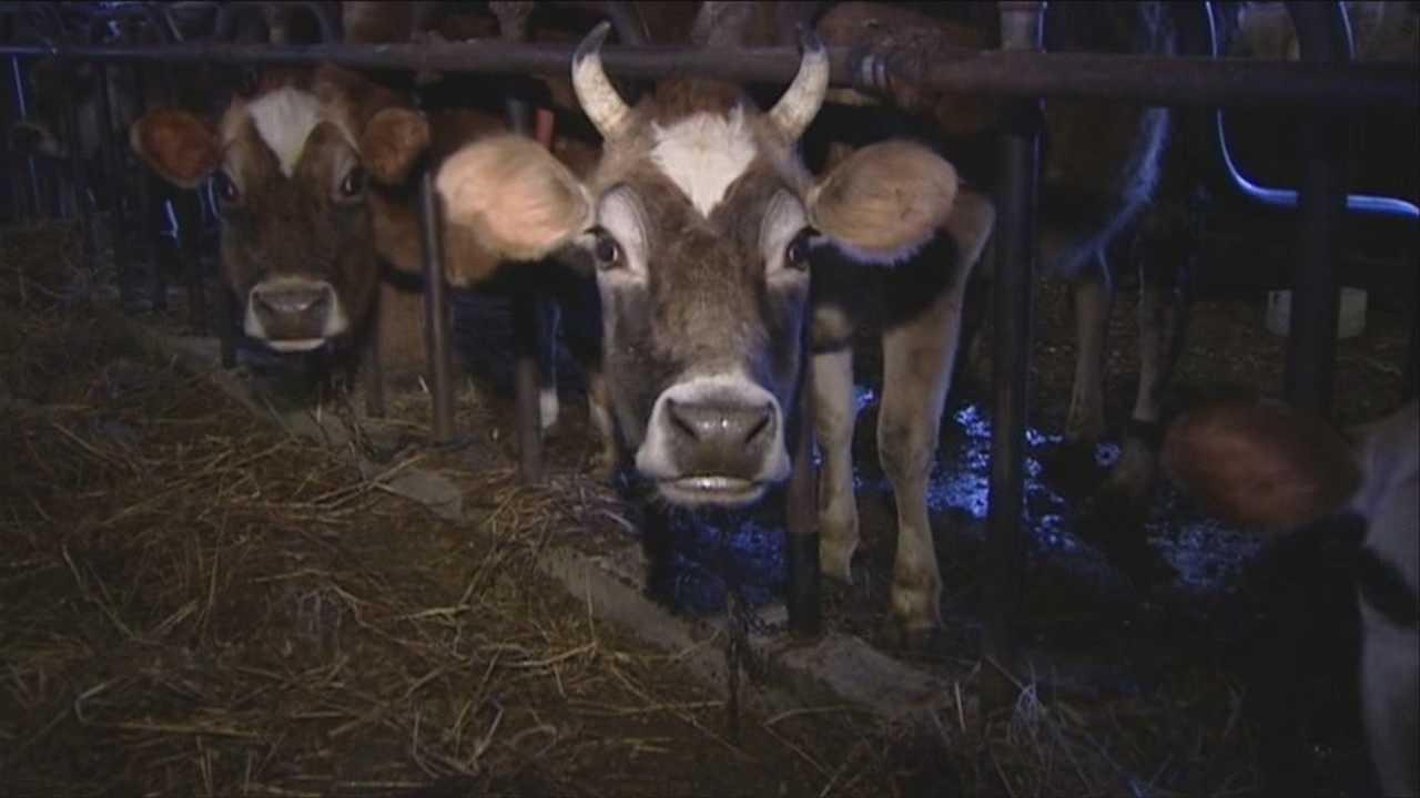 Flood causes headache for farmers